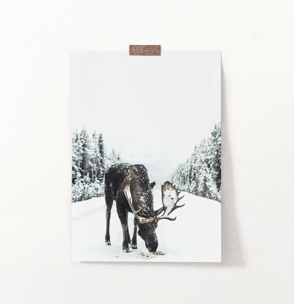 Moose On a Snowy Country Road Photo Wall Decor