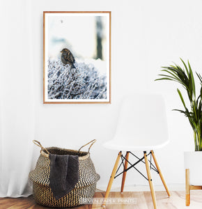 Wood-framed Sparrow On Snow-Covered Branches Photo Wall Art