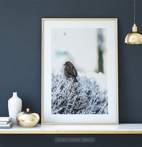 Gold-framed Sparrow On Snow-Covered Branches Photo Wall Art