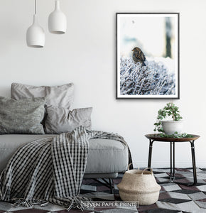 Black-framed Sparrow On Snow-Covered Branches Photo Wall Art