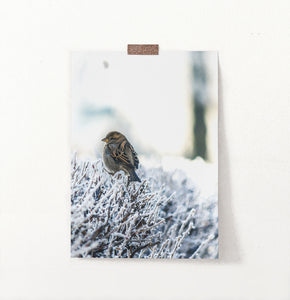 Sparrow On Snow-Covered Branches Photo Wall Art