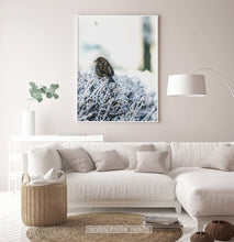 Load image into Gallery viewer, White-framed Sparrow On Snow-Covered Branches Photo Wall Art