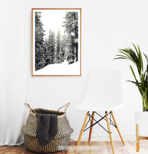 Wooden-framed Wood With Showy Spruces Photo Print