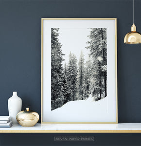 Gold-framed Wood With Showy Spruces Photo Print