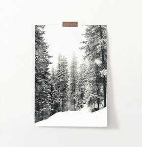 Wood With Showy Spruces Photo Print
