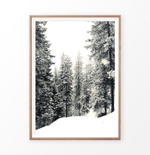 Load image into Gallery viewer, Wooden-framed Wood With Showy Spruces Photo Print