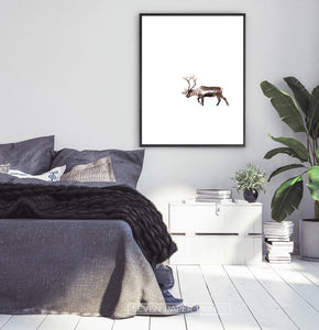 Black-framed Deer Walking Through White Nowhere Photo Print