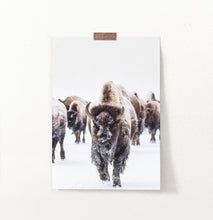 Load image into Gallery viewer, European Bison Herd Running In Snow Poster