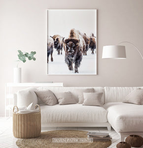 White-framed European Bison Herd Running In Snow Poster