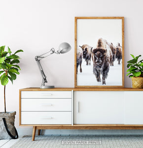 Wooden-framed European Bison Herd Running In Snow Poster