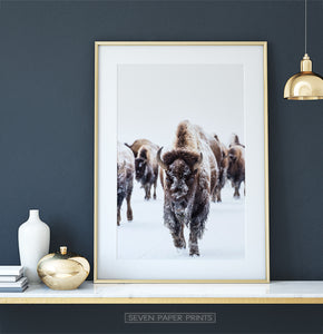 Golden-framed European Bison Herd Running In Snow Poster