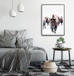 Black-framed European Bison Herd Running In Snow Poster