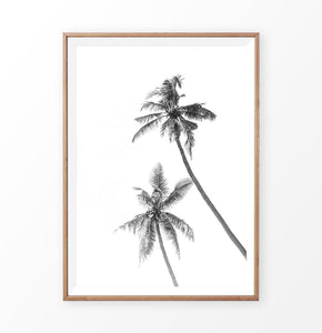 Black White Palm Print