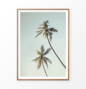 Palm Tree Poster. Turquoise sky, golden leaves