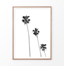 Load image into Gallery viewer, Black White Palm Trees Isolated