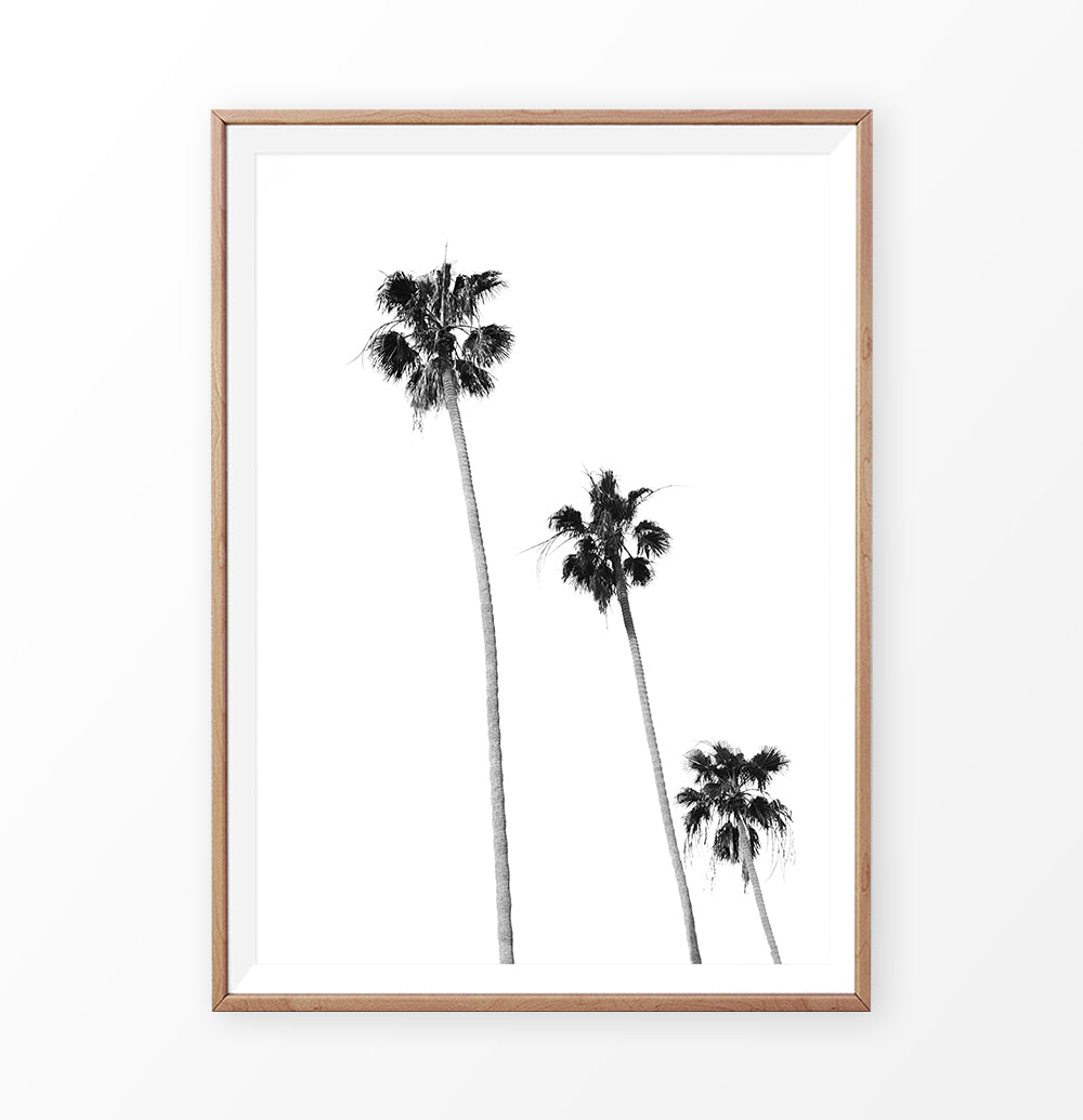Black White Palm Trees Isolated