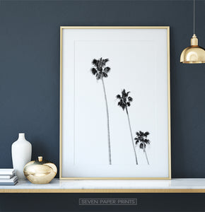 Black and White Coastal Palm Trees Wall Art