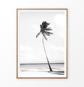 Black and white palm tree on the beach art