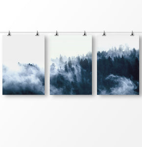 Foggy forest, blue forest photography, misty pine trees