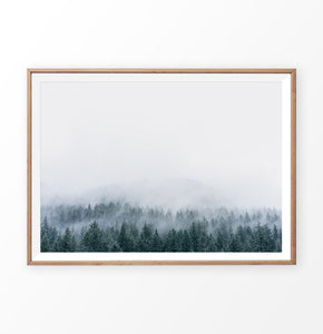 Misty Fir Forest Canadian Natural Wall Art