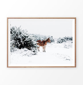 Horse in a snowy landscape wall art in a wooden frame