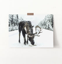 Load image into Gallery viewer, A moose on a snowy forest road photo print