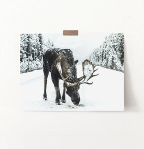 A moose on a snowy forest road photo print