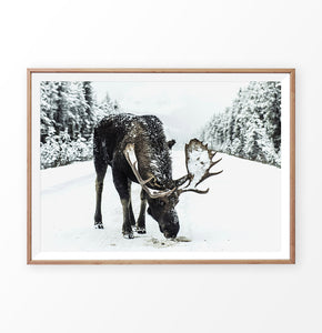 A moose on a snowy forest road photo print in wooden frame