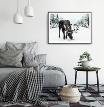 Load image into Gallery viewer, A moose on a snowy forest road photo print in a black frame haning on a bedroom wall