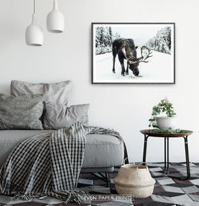 A moose on a snowy forest road photo print in a black frame haning on a bedroom wall