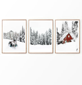 Reindeer  In Snowy Pine Forest Set of 3 Christmas Photos