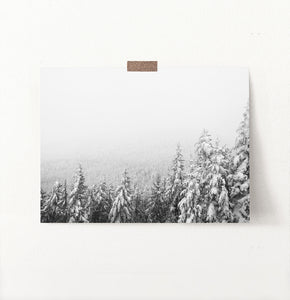Winter Forest Valley Covered in Snow Photo Print