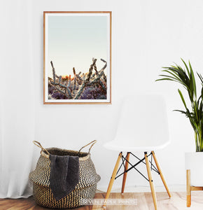 Cactus Sunset Wall Art