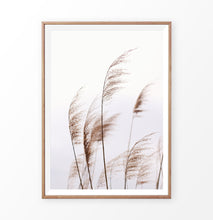 Load image into Gallery viewer, Phragmites australis print, common reed wall art