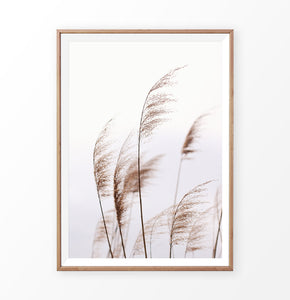 Phragmites australis print, common reed wall art