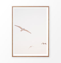 Load image into Gallery viewer, Seagull wall print, ocean bird photography