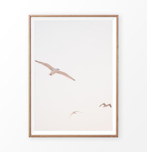 Seagull wall print, ocean bird photography