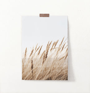 Brown Common Reed Poster