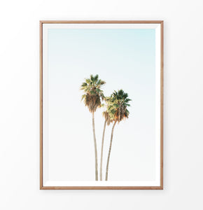 High palm trees photo, coastal palm art