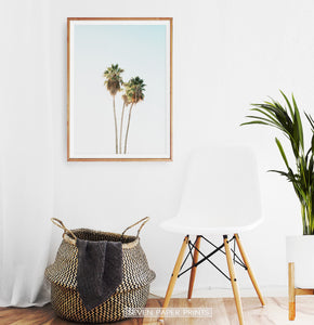 Tall Palm Trees Print
