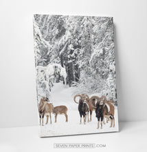 Load image into Gallery viewer, Mountain Sheep Canvas Print