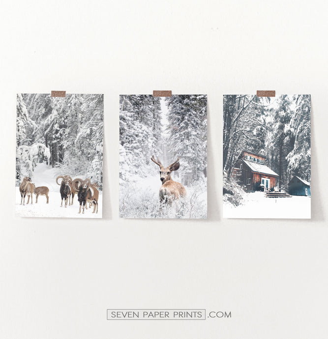 Lovely 3-Piece Set Of Winter Forestside Posters