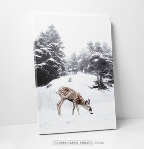 Deer on a snowy glade canvas print