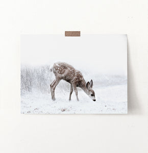 Fawn Searching On Winter Field Photo Print