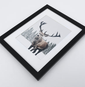 Big brutal reindeer photo print in a black frame