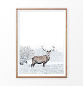 Wooden-framed photo print