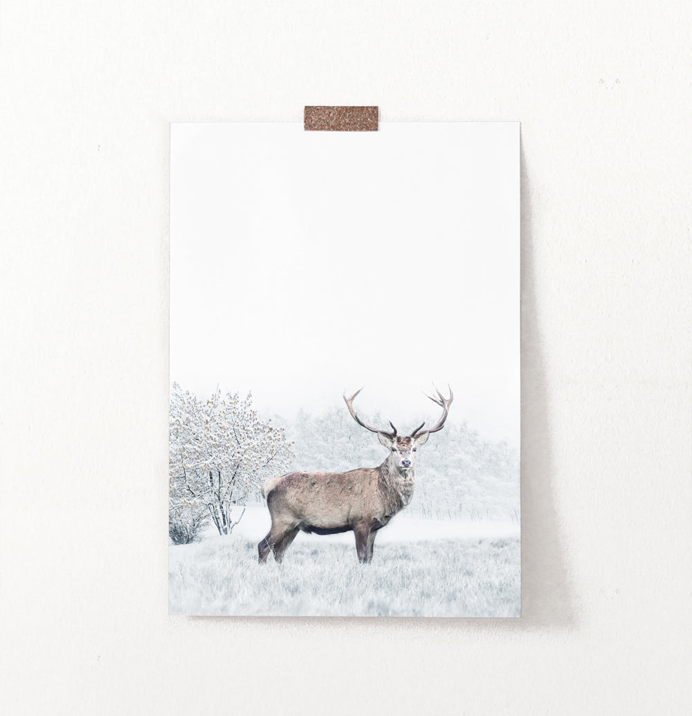 Great Alpha Male Deer On Snowy Background Wall Art