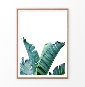 Green Palm Banana Tropical Leaf