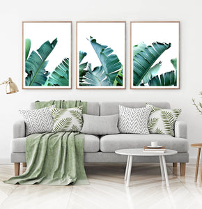 Green Banana Leaf Set of 3 Botanical Prints