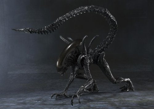 Image 8 for Alien Vs Predator - Alien Warrior - S.H.MonsterArts (Bandai)